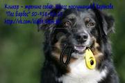 Кликер – тренинг собак. Класс послушания в Харькове.
