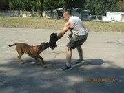 Дрессировка Собак Любой Породы