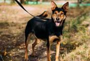 Уникальный пес Амадей ищет семью